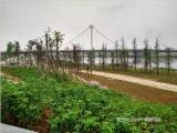 滨溪公园实景