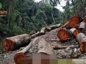 老挝红木增值税增收,或推动红木再涨